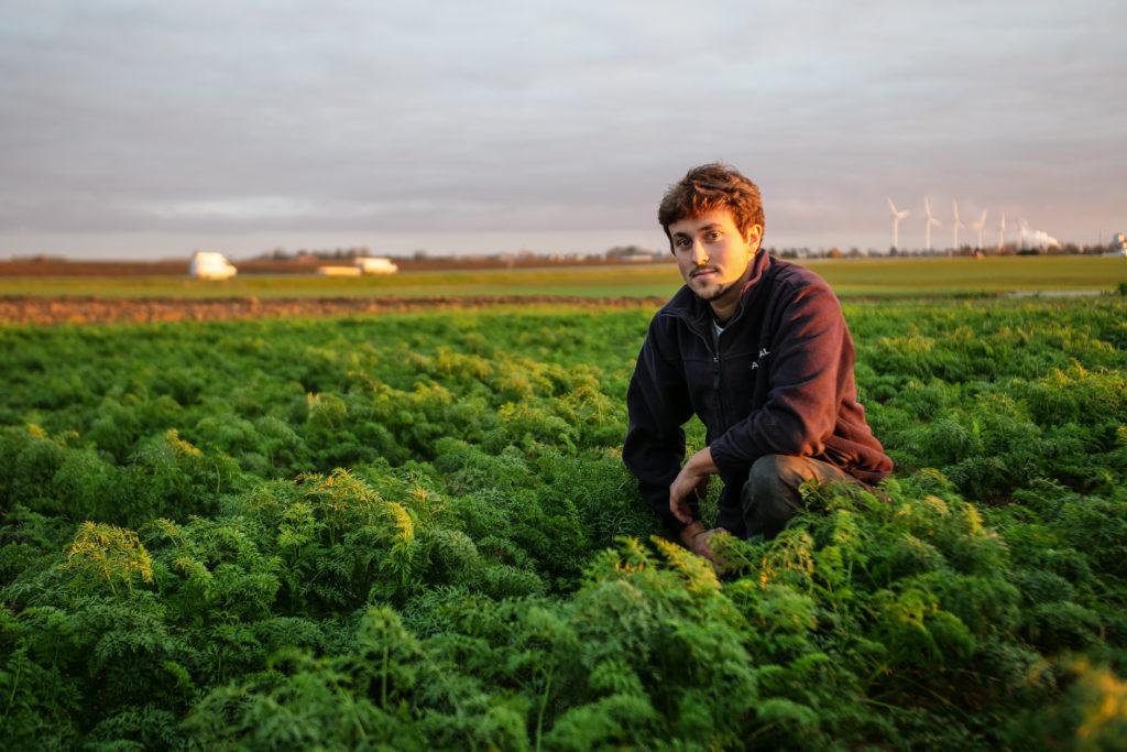 Maraicher de légumes de pleins champs